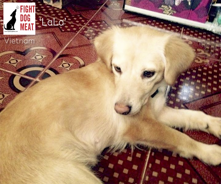 Vietnam: Stolen Pet Dog's Owner Begs For The Return Of Her Dog