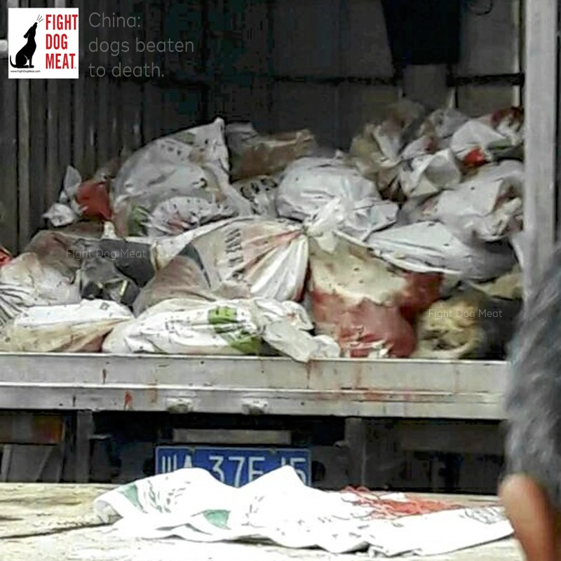 China: ALL Dogs Beaten To Death In Meishan City