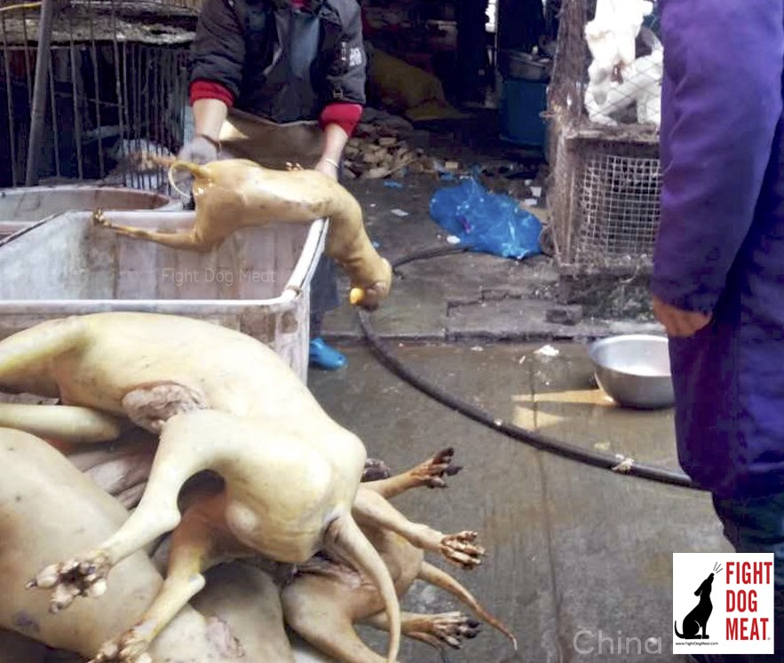 China: Dog Meat Slaughterhouse Today