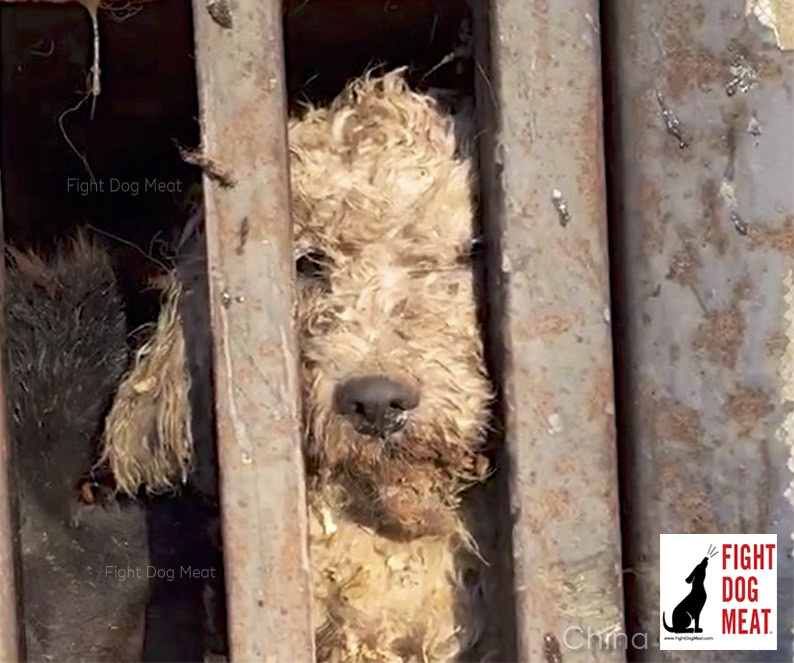 China: Largest Dog Meat Slaughterhouses In China