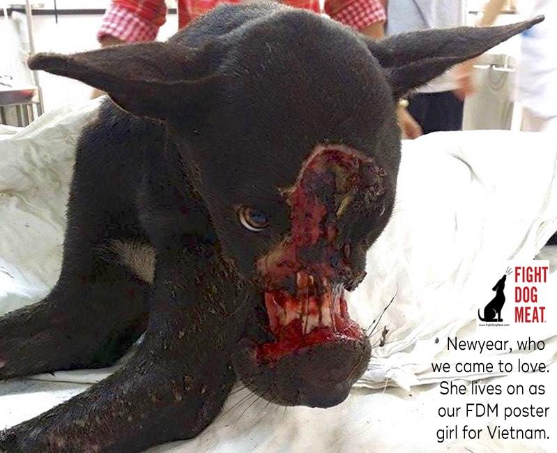 www.FightDogMeat.com, pet centric, #fightdogmeat