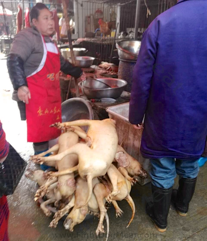 China: Dog Meat Slaughterhouse Today - Fight Dog Meat - photo#46