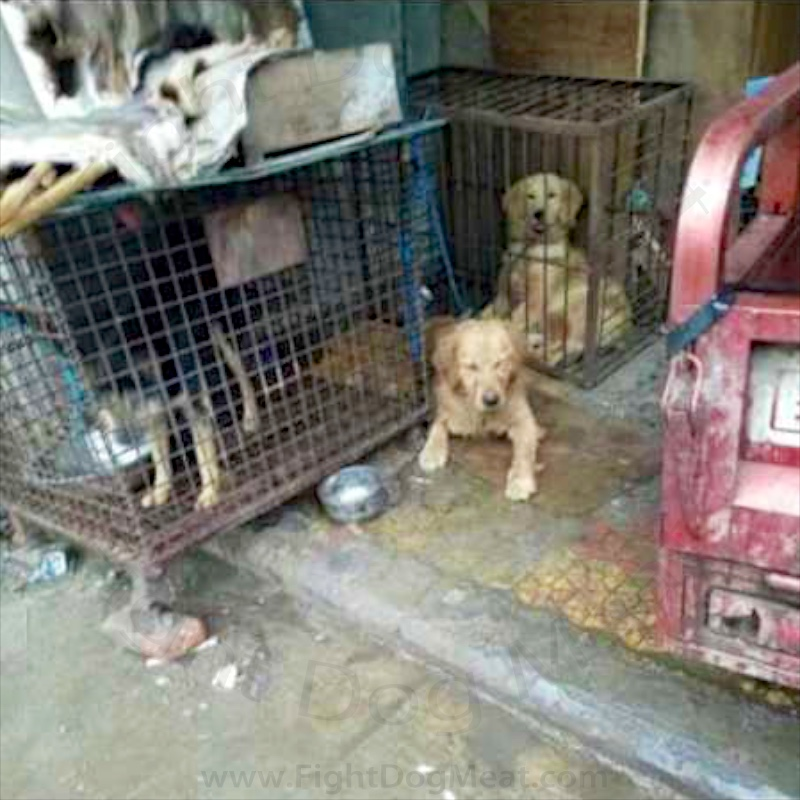 China: Dog Meat Slaughterhouse Today - Fight Dog Meat - photo#38