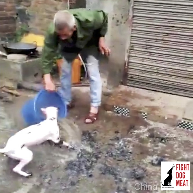 China: Live Dog Slowly Boiled Alive