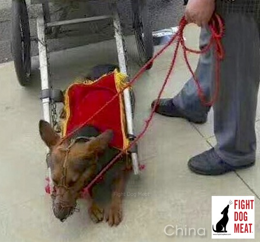 China: Dog-Rickshaw Cruelty