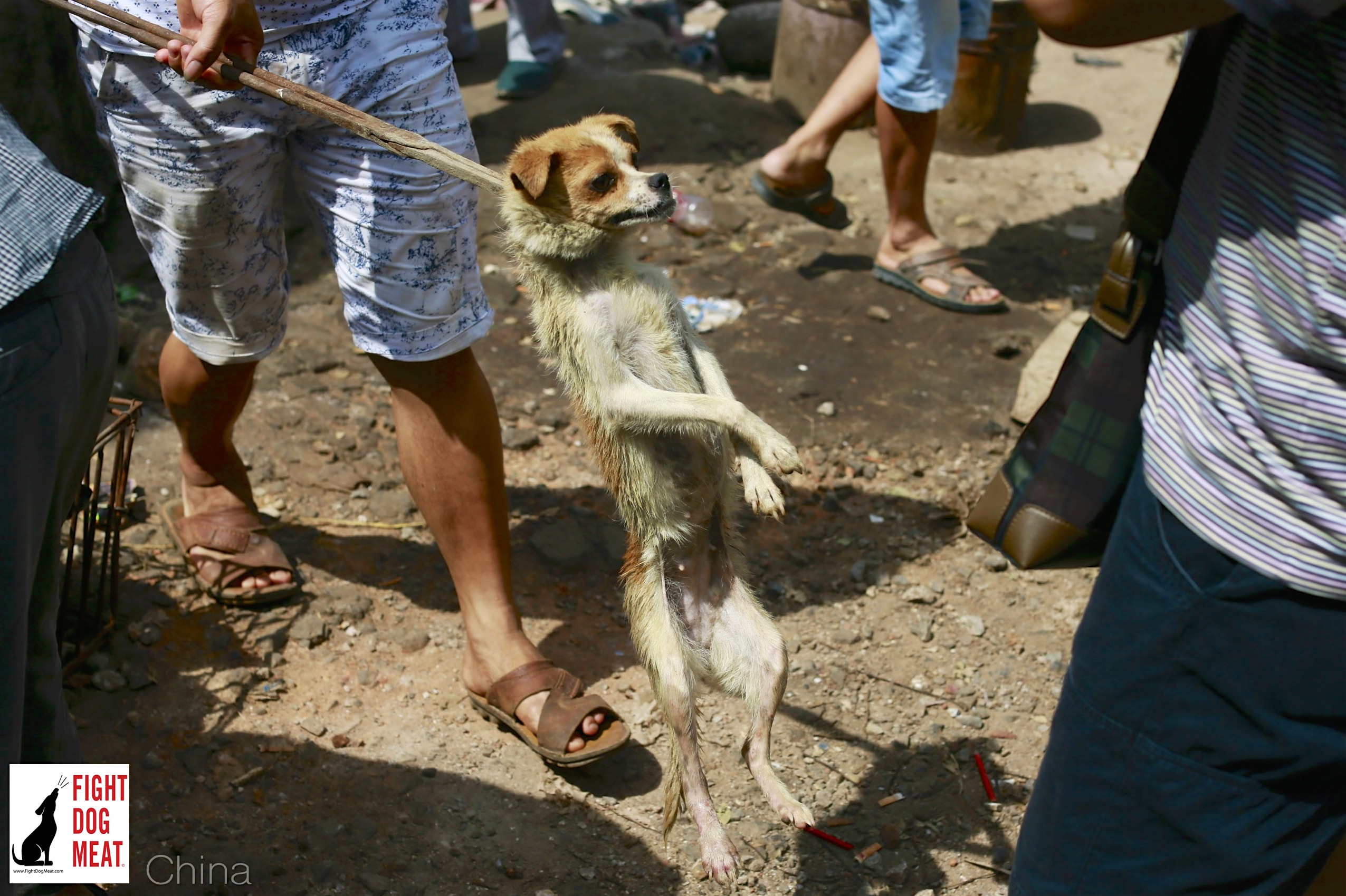 China: Yulin Trickery Continues