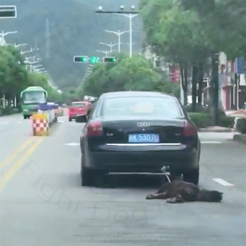 China: Dog Meat Dog Dragged Behind A Car