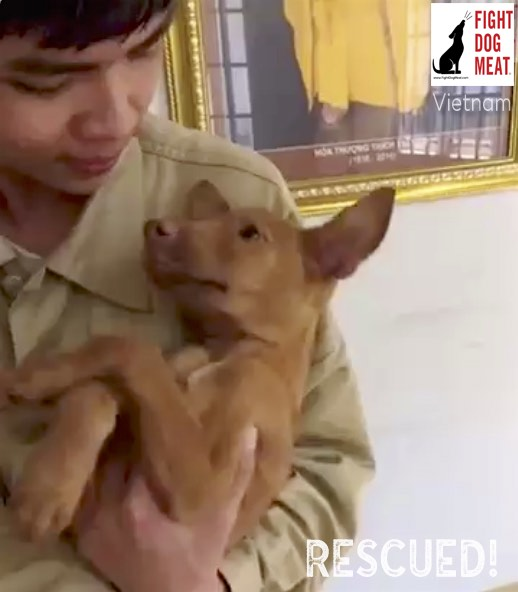 Vietnam: Rescued! 15 Dog Meat Dogs
