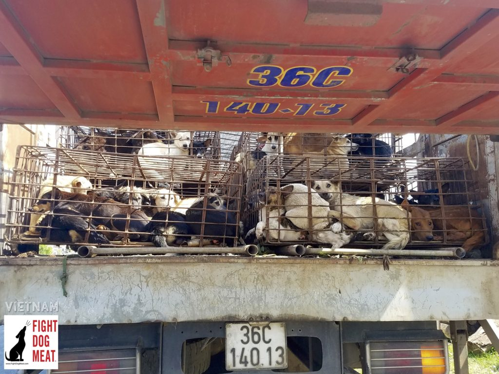 Vietnam: Loaded Dog Meat Truck in Ninh Hoa