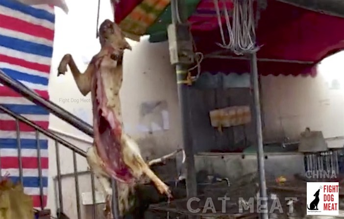 China: Live Cats For Cat Meat in Nanning