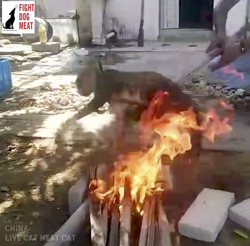 China: Cat Burned For Meat As People Laugh