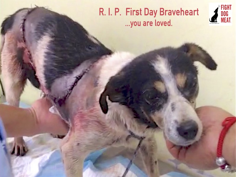 China: R.I.P., First Day Braveheart Has Lost Her Battle