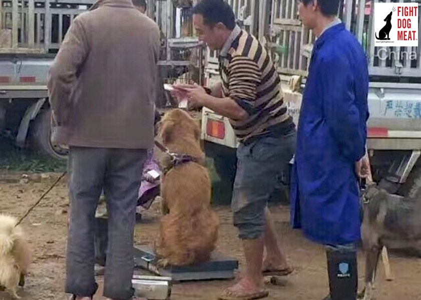 China: Dog Meat Market Where Owners Sell Unwanted Pets