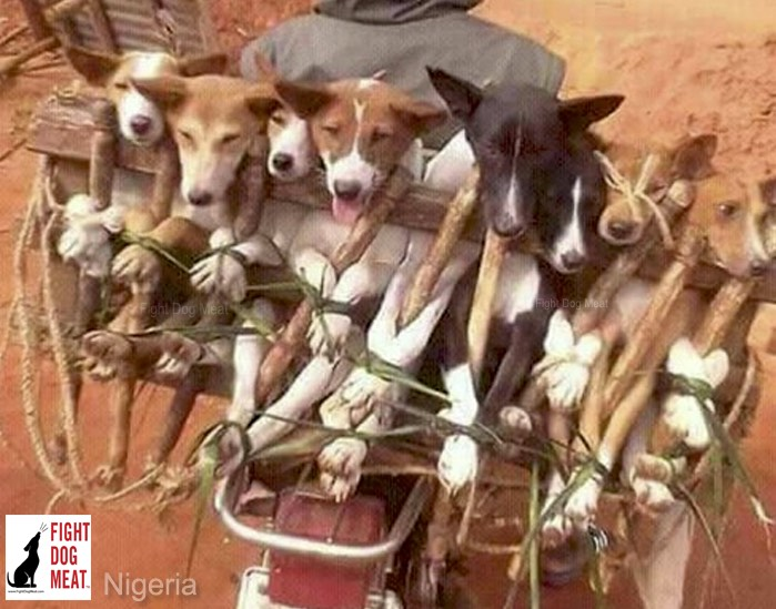 Nigeria: Africa's Largest Dog Meat Trade