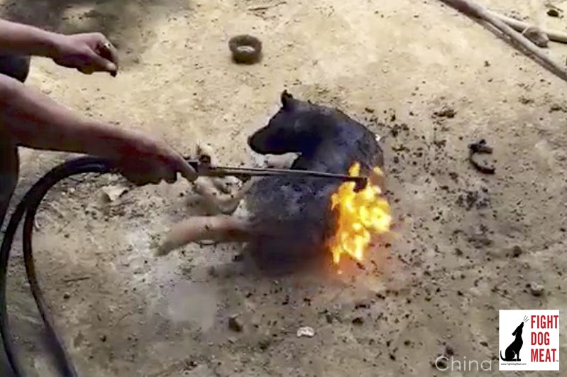 dog burned alive Archives - Fight Dog Meat