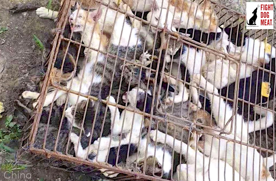 China: Rescued! Cat Meat Cats Now Safe