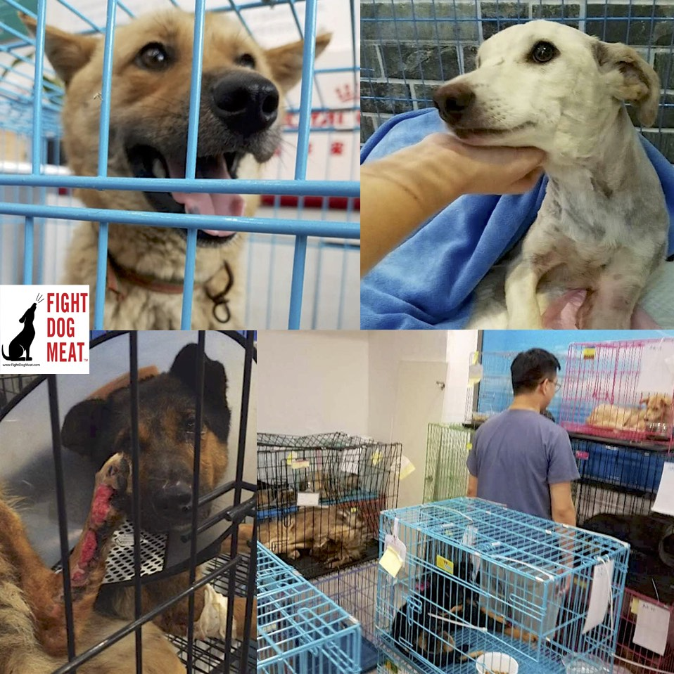 www.FightDogMeat.com, pet centric, Fight Dog Meat
