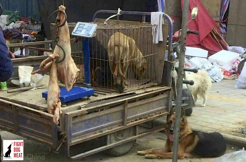 China: Street Dog Meat Vendors in Henan