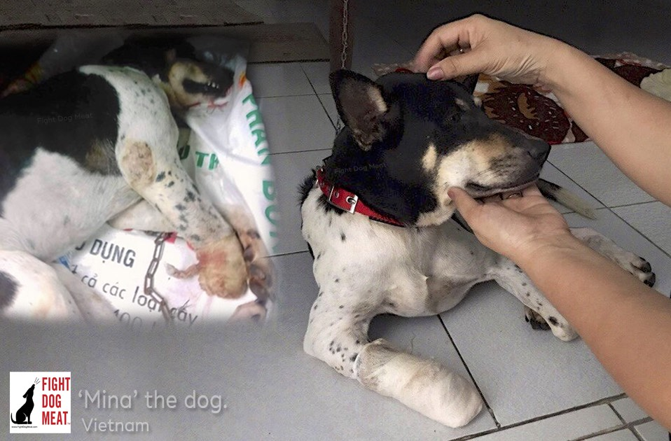 Vietnam: Woman Hacks Off Her Dog's Leg