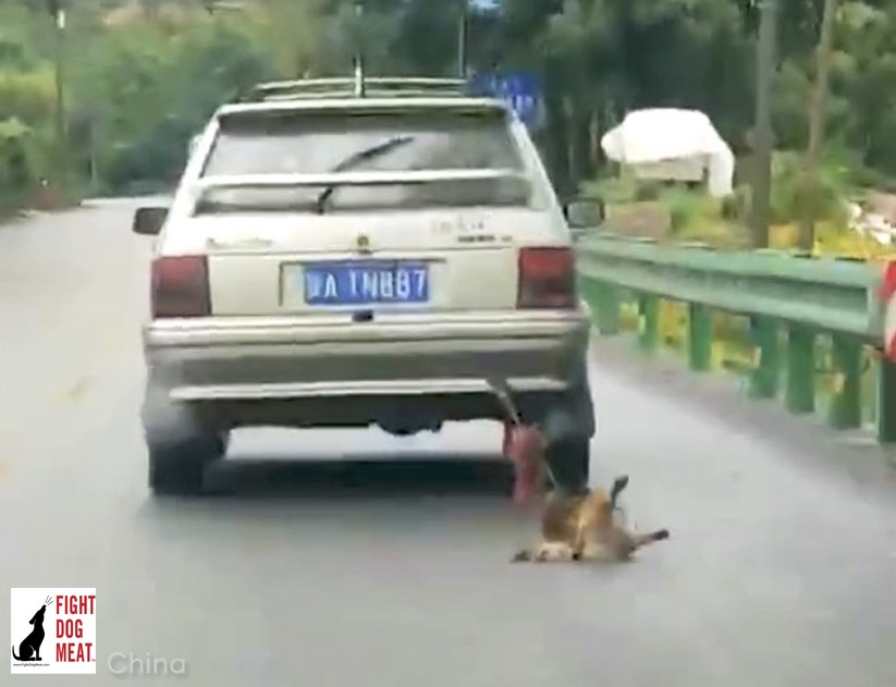 China: Dog Dragged Behind Car