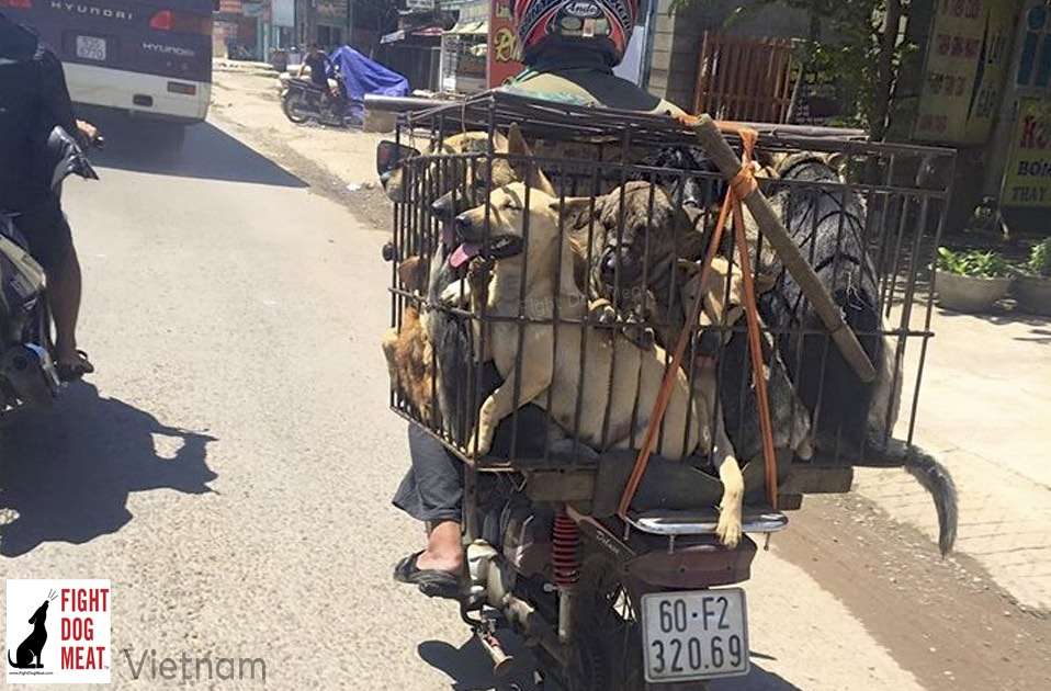 Vietnam: Dog Meat Traders Cause Distress