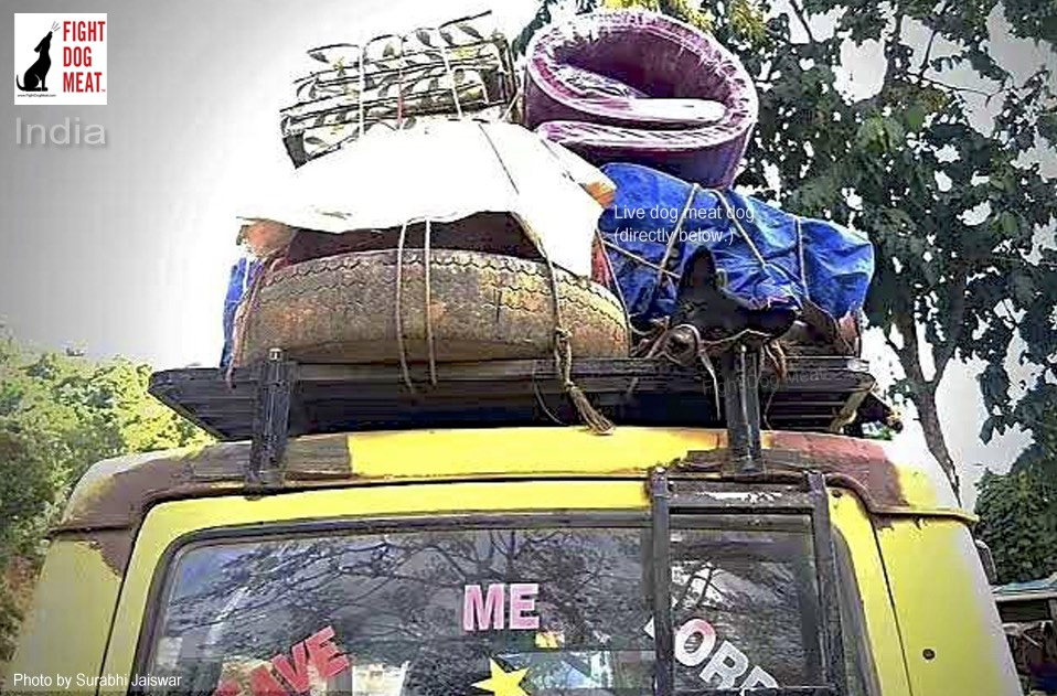 India: Nagaland Dog Meat Dog Tied To The Roof Of A Vehicle