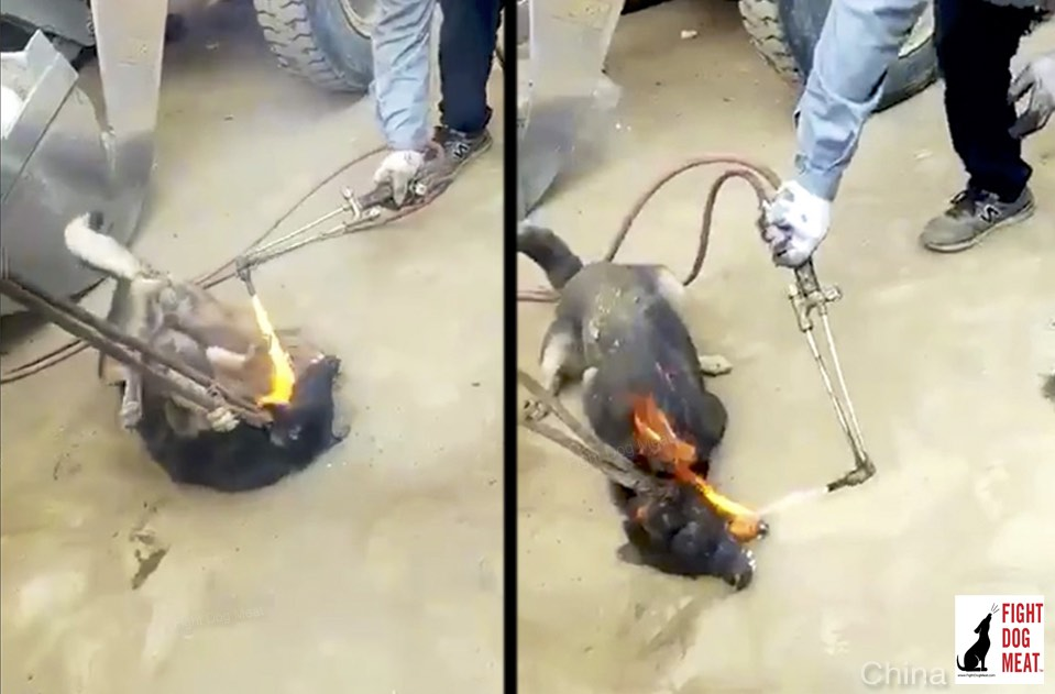 China: Dog Butcher Sets Fire To Dog's Tongue And Eyes