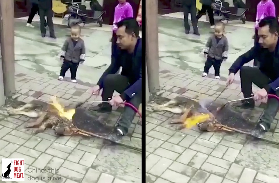 China: Dog Meat Dog Burned Alive In Front Of Children