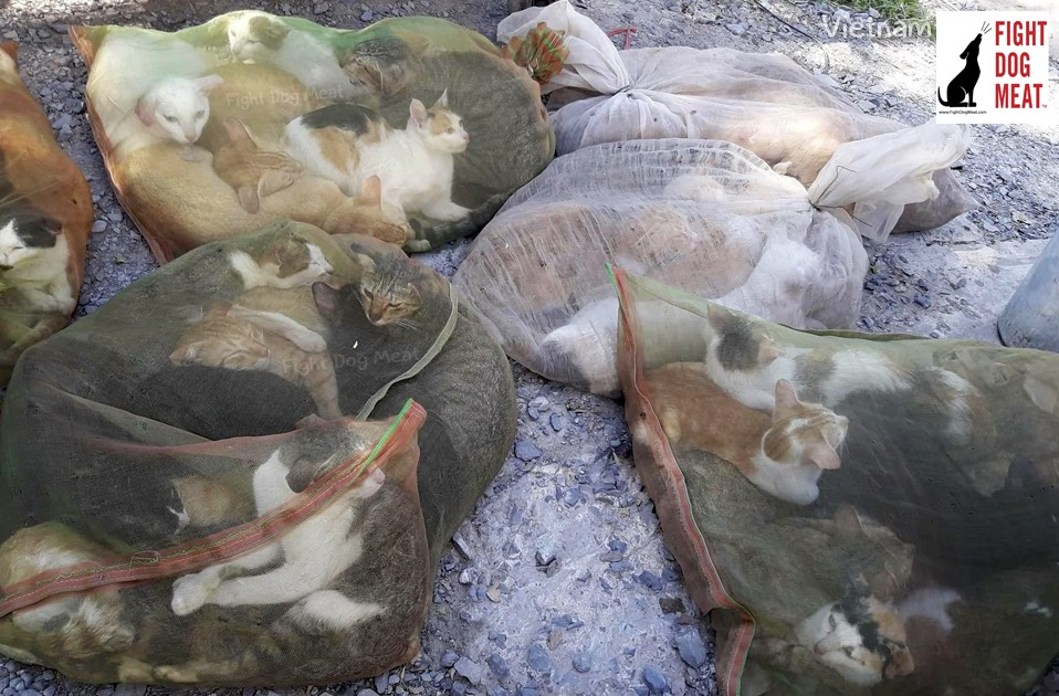 Vietnam: Cat Meat For Christmas In Vietnam