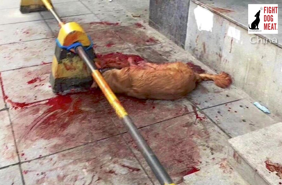 China: Police Officer Bludgeons Golden Retriever Over Three Hours