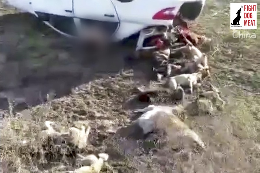 China: Dog Thief And Dogs Killed In Fatal Accident
