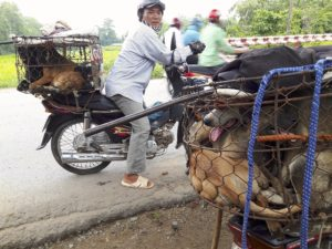 Dog meat in Vietnam, www.FightDogMeat.com