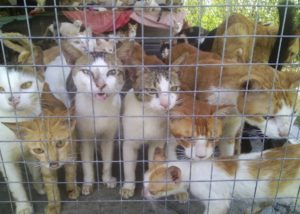 Rescued cat meat cats in Vietnam.