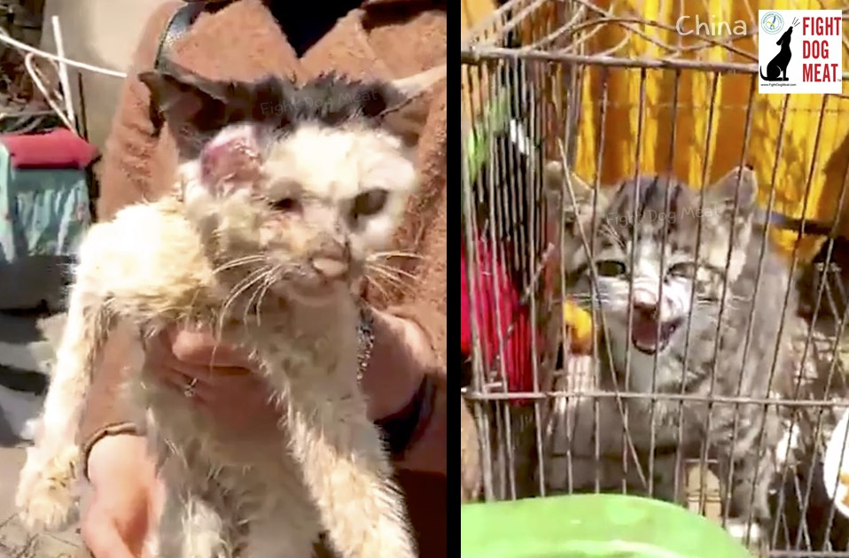 China: People Eating Female Cat Placentas In Zhejiang
