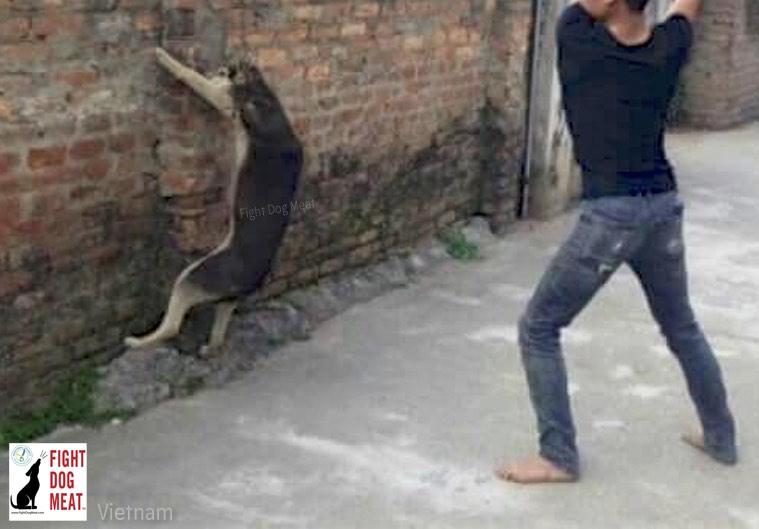 Dog being bludgeoned; wwwFightDogMeat.com