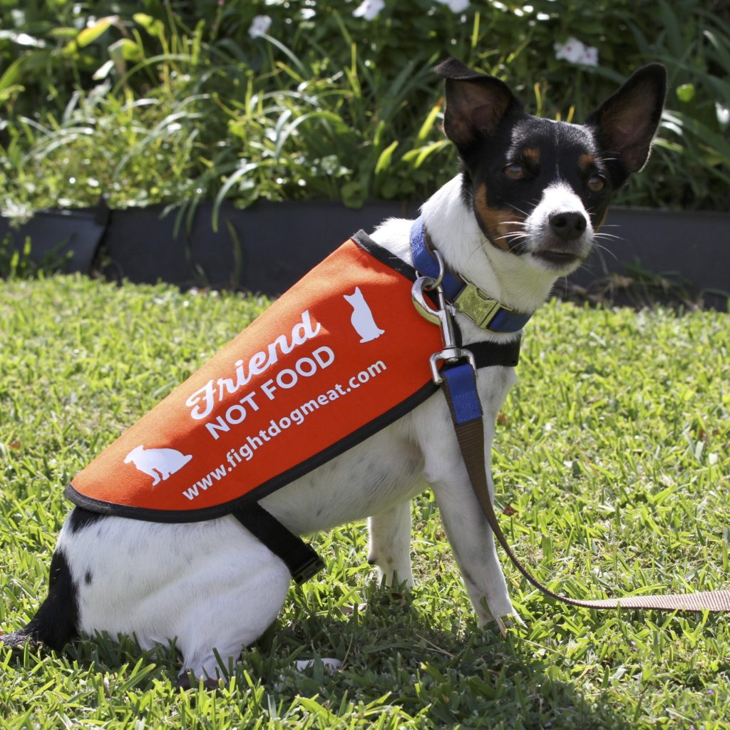 Dog Laws In South Australia