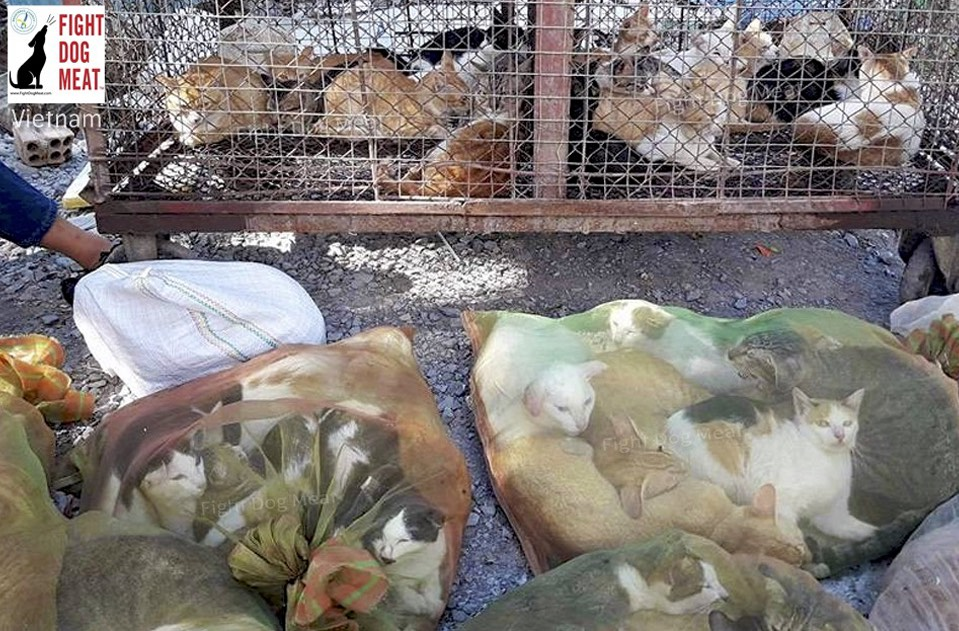 Vietnam: Fight Dog Meat Helped Close A Cat Butcher Down