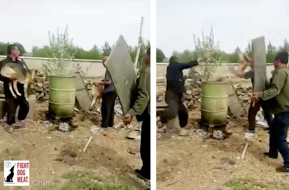 China: Dogs Boiled Together In 44 Gallon Drum