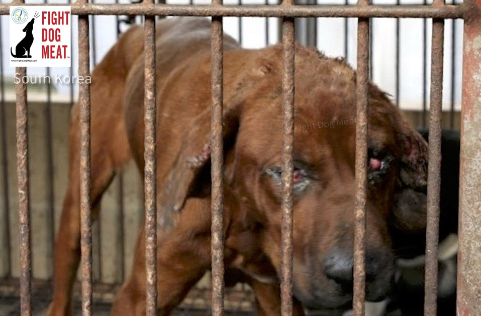 South Korea: Dog Meat Farmers Protest For Equal Rights