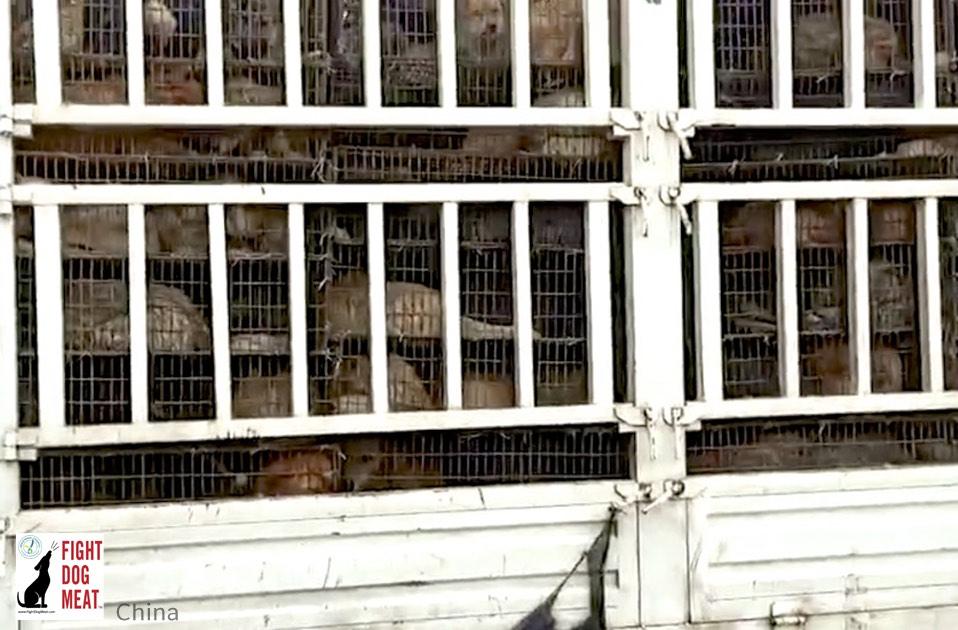 China: Yulin 2018