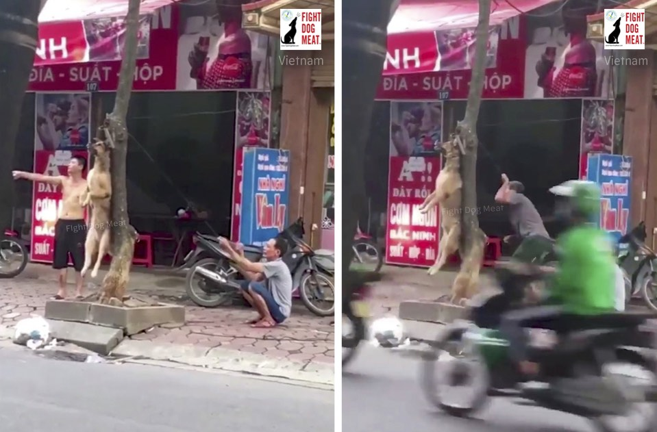 Vietnam: Helpless Dog On Busy Road