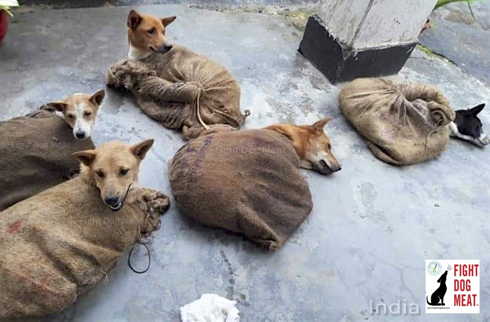 India: Illegal Dog Meat Trafficking In Tripura