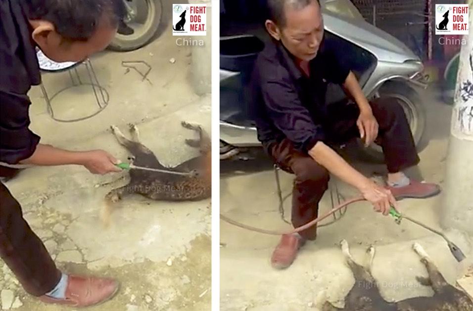 China: Dog Burned As Men Laugh