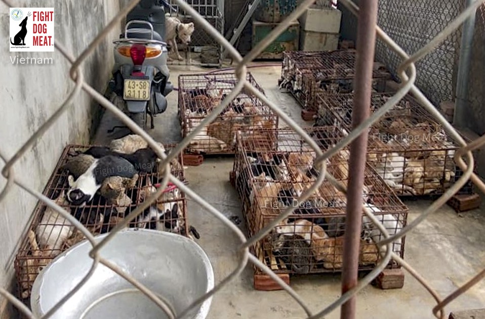 Vietnam: Cat Slaughterhouse In Da Nang