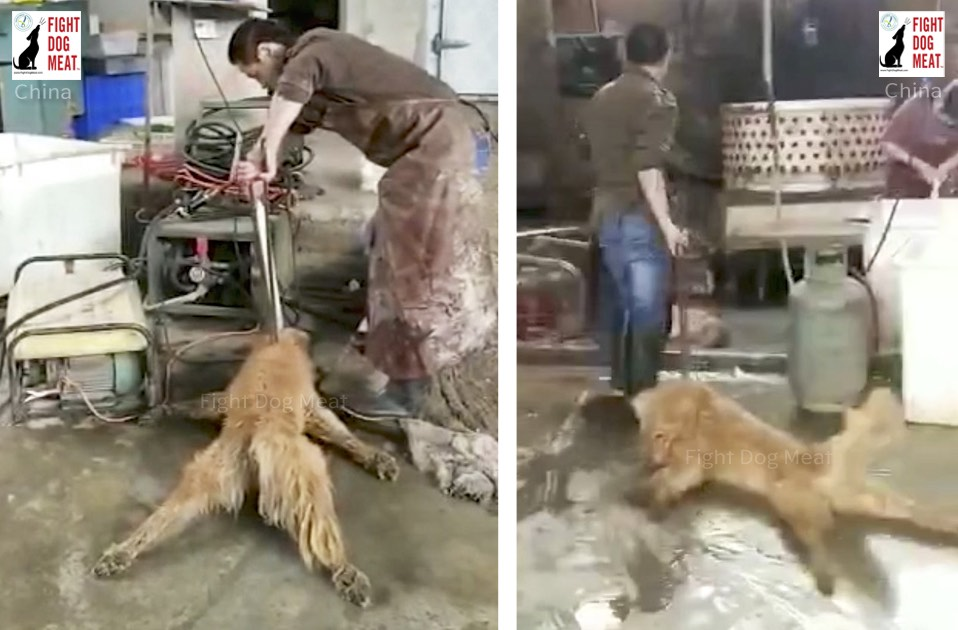China: Sichuan Slaughterhouse Exposed