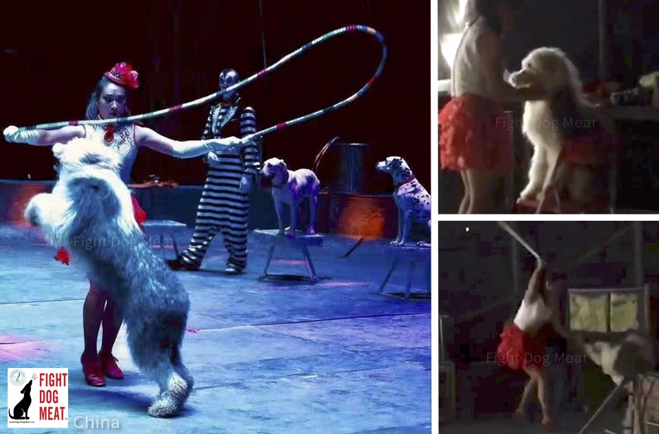 China: Woman 'Circus Dog Trainer'