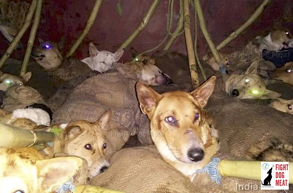 India: Mizoram Dog Traffickers