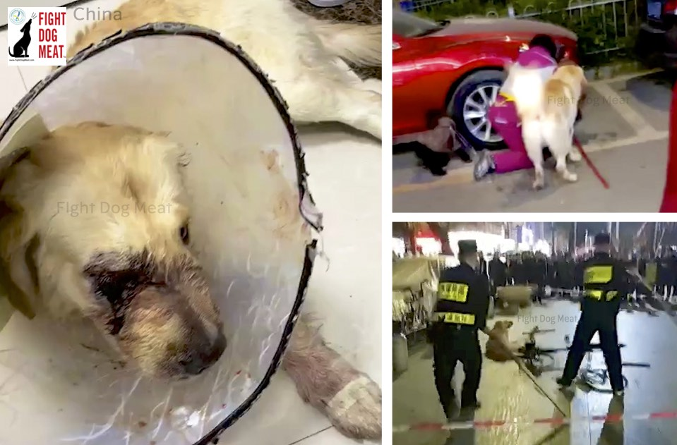 China: Golden Retriever Brutally Attacked