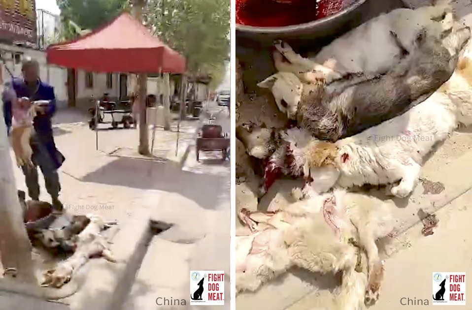 China: Pavement Used to Advertise Dog Meat