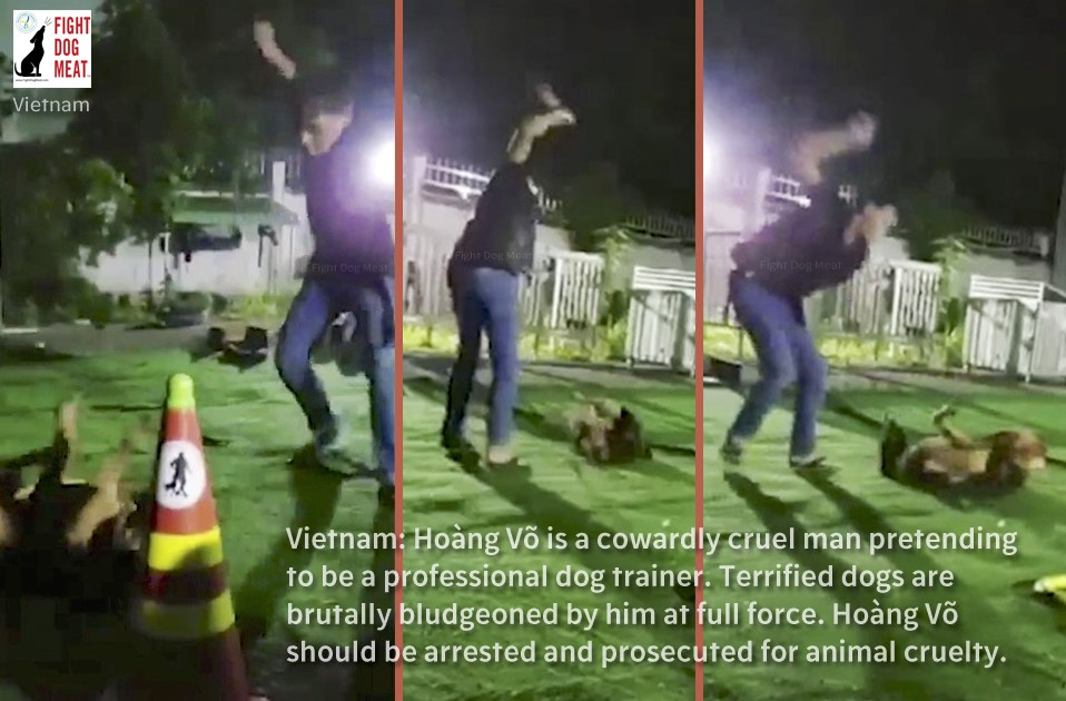 Vietnam: Cowardly Dog Trainer Bludgeons Dogs